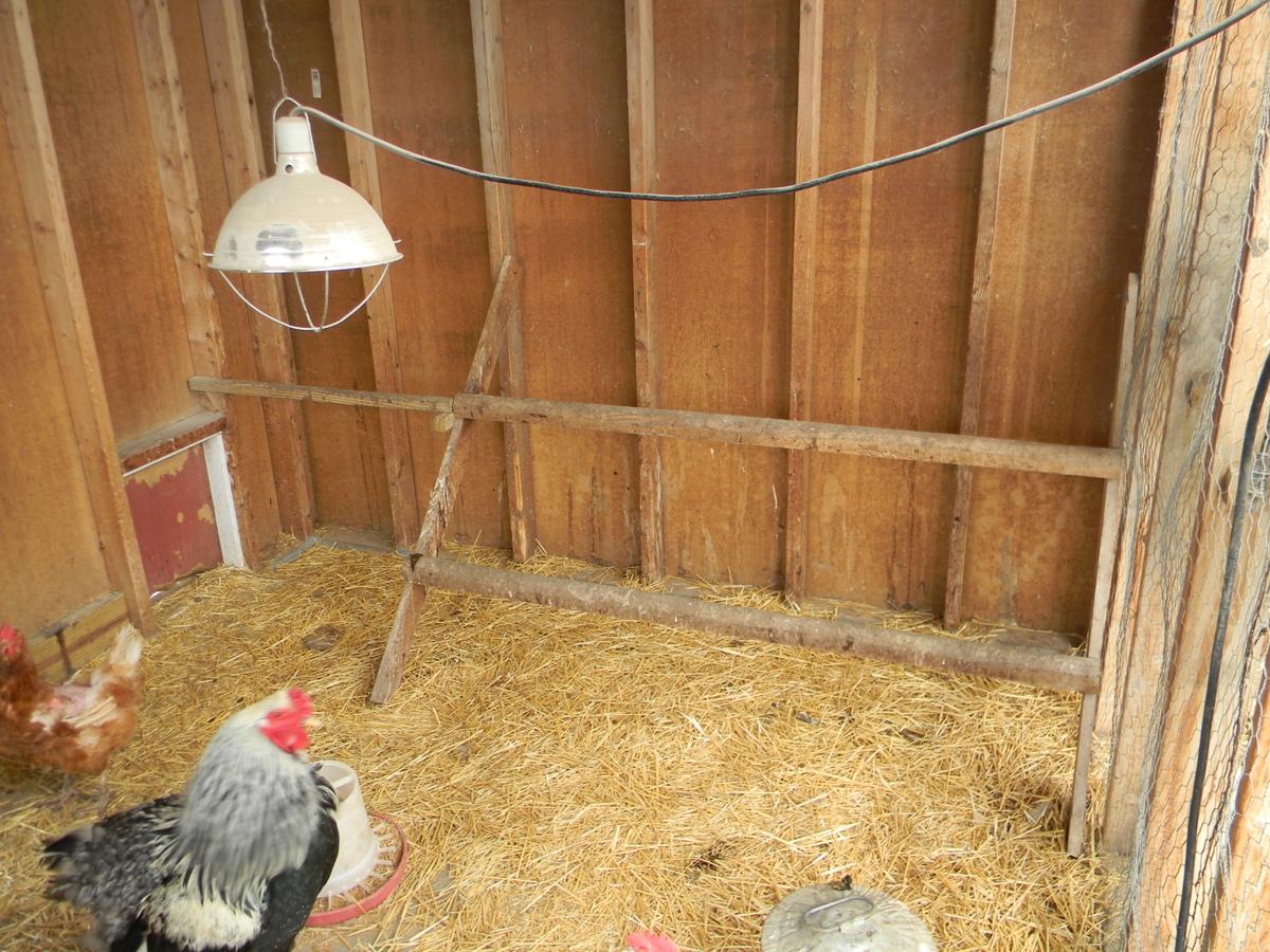 The chiken coop - 4 5