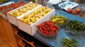 Tomatillos and Peppers