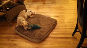 A Wonder Dog and His Toy