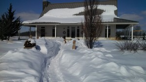 Snowbound Owen