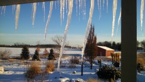 Day Icicles
