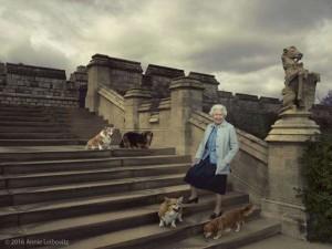Queen's Corgis